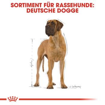 Deutsche Dogge Adult 12kg
