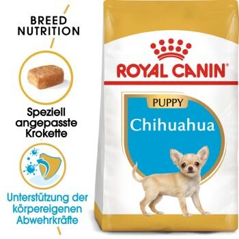 Chihuahua Puppy 1,5 kg