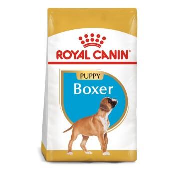 Boxer Puppyy 12kg