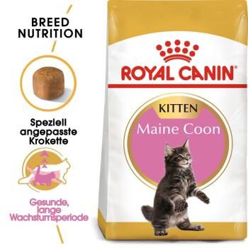 Maine Coon Kitten 10kg