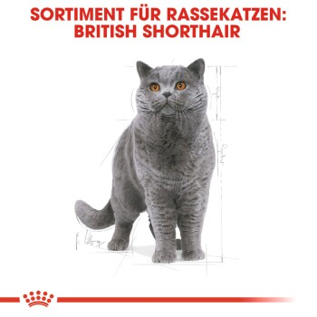 British Shorthair Adult 4kg