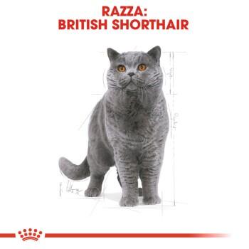 British Shorthair Adult 2x10kg