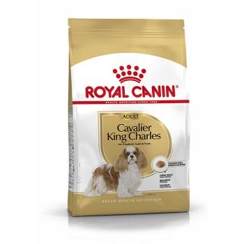 Cavalier King Charles Adult 7,5kg