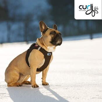 curli-Vest-Harness-Air-mesh-French-Bulldog-800x800.jpg