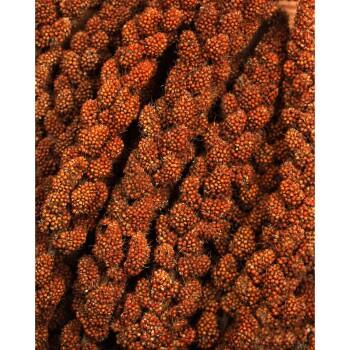 miglio panìco rosso 3x500g