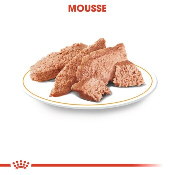 Dachshund Adult Mousse 12x85g