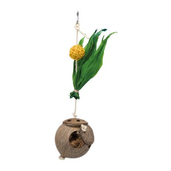 Kokosnuss am Sisalseil