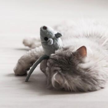 befüllbare Maus