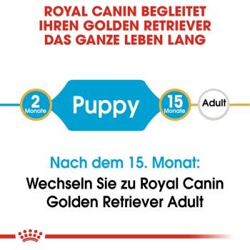 Golden Retriever Puppy 2x3kg