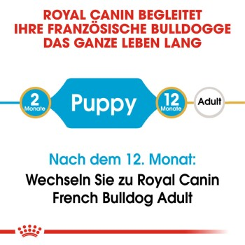Französische Bulldogge Puppy 3kg