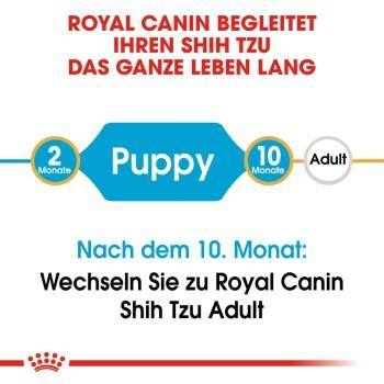 Shih Tzu Puppy 1,5kg