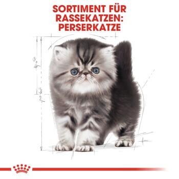 Persian Kitten 4kg
