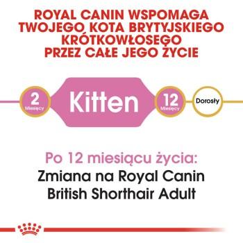 British Shorthair Kitten 10kg