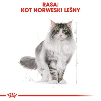 Norwegian Forest Adult 10 kg
