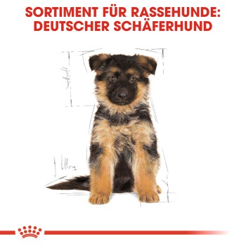 German Shepherd Puppy 12 kg
