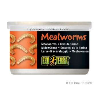 Mehlwürmer 34g