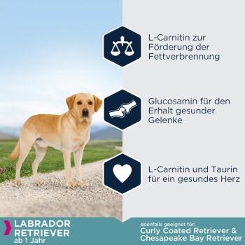 Breed Specific Labrador Retriever 12kg