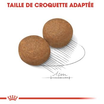 Croquettes chien Maxi Adulte 2x15kg