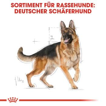 Deutscher Schäferhund Adult 11kg