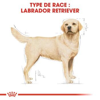 Labrador Retriever Adulte 2x12kg
