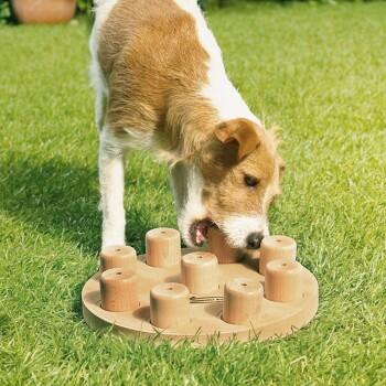 Nina Ottosson Intelligenzspielzeug Dog Smart