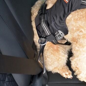 Pettorina di sicurezza per auto Renegade XS